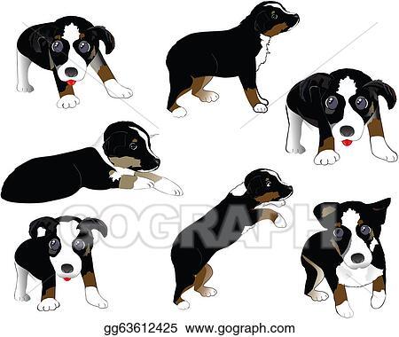 Stock Illustration - Australian shepherd puppy. Clipart gg63612425