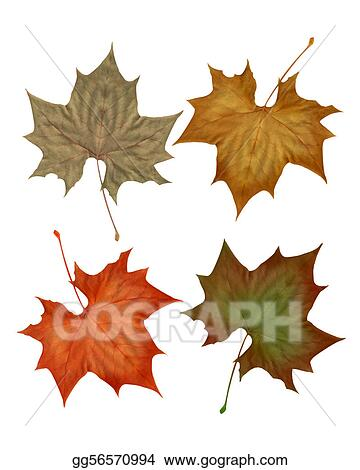 Autumn fall leaves isolated 