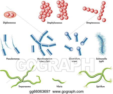 Illustration of some types of bacteria stock illustration gg66063697