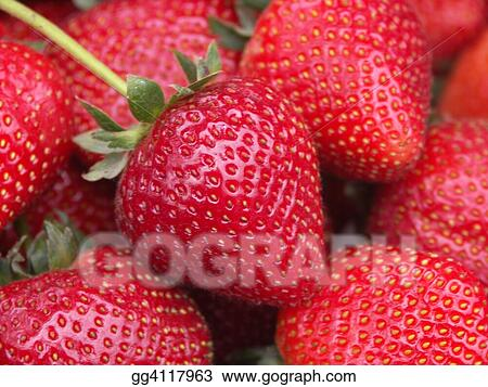 Big Ripe Strawberry
