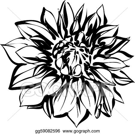 Vector Stock - Black and white sketch of chrysanthemum. Clipart ...