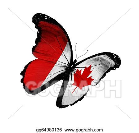 Canadian flag butterfly flying, isolated on white background