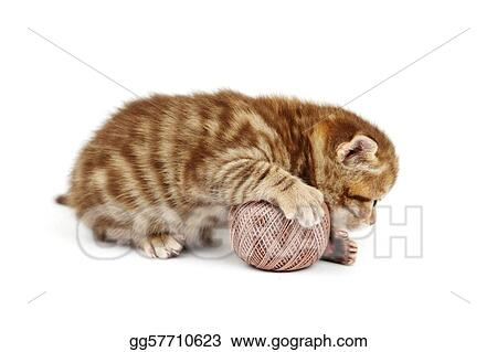 cat and gray wool ball