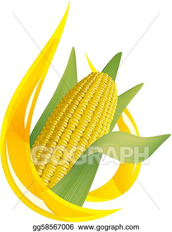 Corn oil. Stylized drop of oil, and corn cob. 