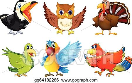 Different kinds of birds