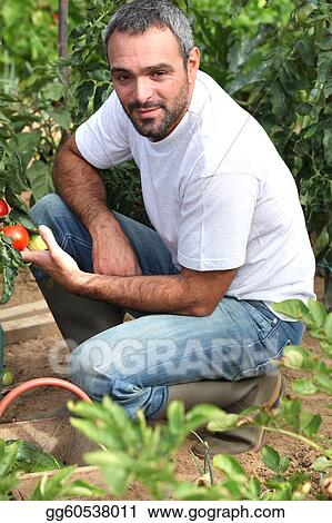 farmer inspecting tomatoes