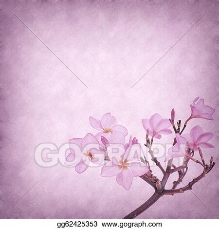 Plumeria Flower Line Drawing Clipart drawing gg62425353