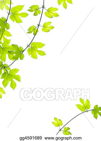 Green vine leaves background