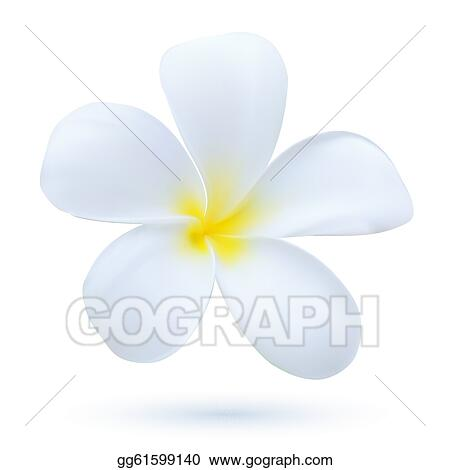 Plumeria Flower Line Drawing Clipart drawing gg61599140