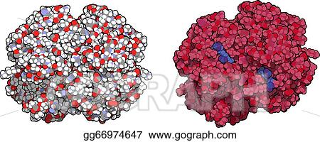chemical structure of human haemoglobin Composition of hemoglobin 3  its molecular weight is 65,000  there are  three types of hemoglobin's that are normally found in human beings, they are:.