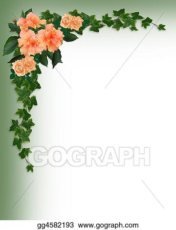 Stock Illustrations - Ivy, hibiscus and roses corner. Stock Clipart ...