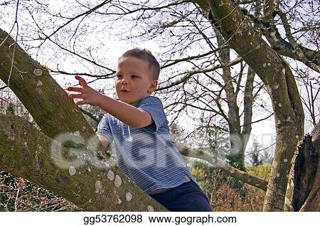 Little Boy Discovering Something in Tree
