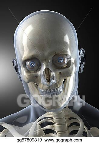 Male Human Head X-ray Front view