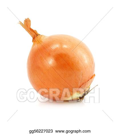 onion vegetable fruit isolated on white