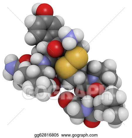 Oxytocin vasopressin orgasm can