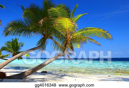 PHENOMENAL BEACH WITH PALM TREES AND BIRD