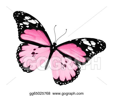 Butterfly Drawings With Color Pink Pink butterfly  isolated on