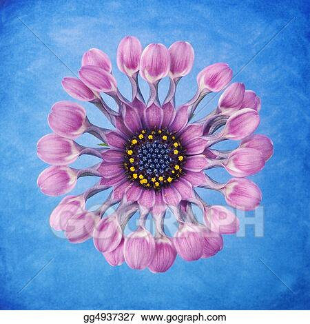 Purple flower with dew drops on handpainted blue watercolor background.  Professionall spotted and retouched.