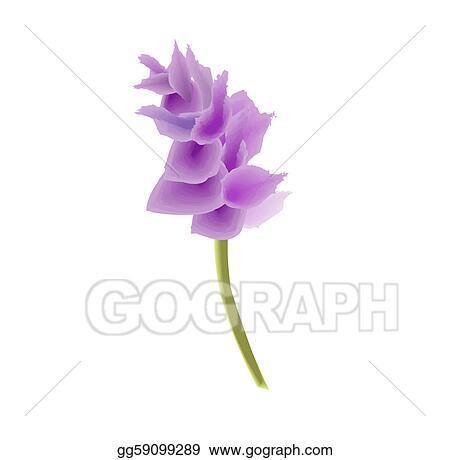 Stock illustration purple pink exotic orchid flower elegant fresh