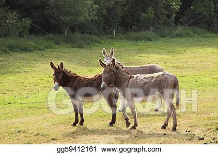 quiet donkey in a field in spring