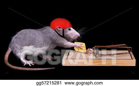 rat cheating death
