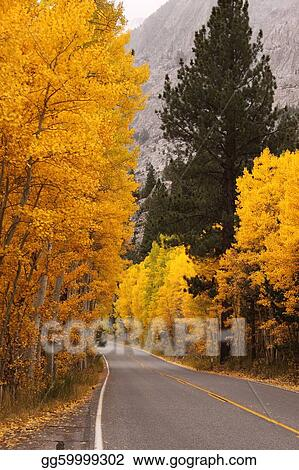 Roadway lined with Autumn Leaves