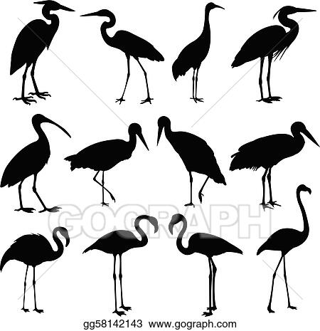 storks, cranes and flamingos