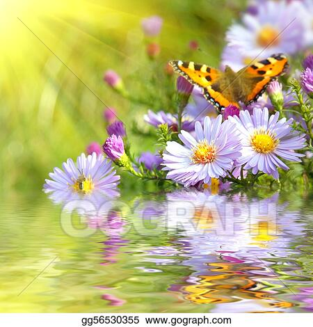 two butterfly on flowers with reflection