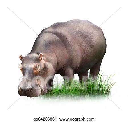 hippos lick crocodiles