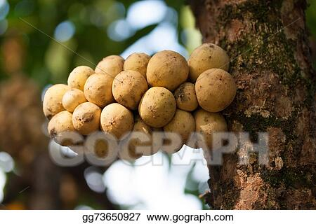 Stock Photo - Wollongong fruit. Stock Photos gg73650927 - GoGraph