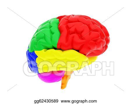 Stock Illustration - 3d human brain  Clipart Drawing