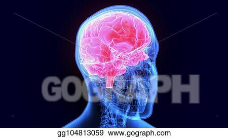 Stock Illustration 3d Illustration Of Human Body Organbrain