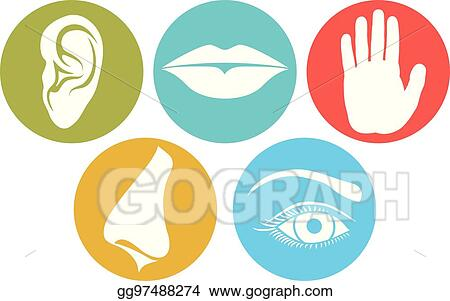 vector art 5 senses smell touch hearing taste and sight nose rh gograph com