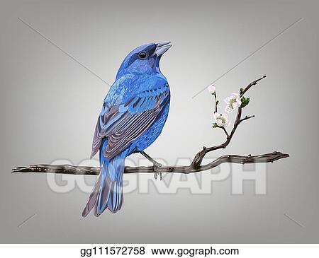 Vector Illustration A Croaking Bird On A Cherry Blossom