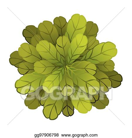 Vector Art - A green plant or tree, top view  vector