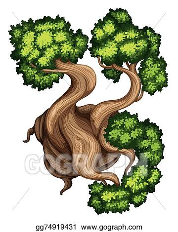 Vector Stock - A topview of a bristlecone pine tree  Stock