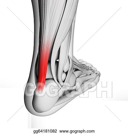 Stock Illustrations - Achilles tendon. Stock Clipart gg64181082 ...