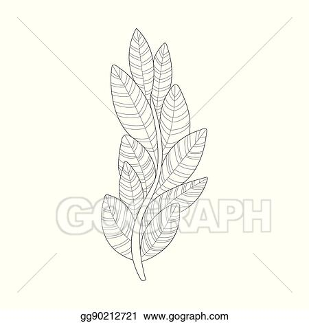 Vector Stock Algae Plant Sea Underwater Nature Adult Black And