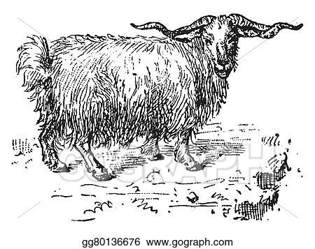 Sheep Livestock Angora Goat Mohair Clip Art Goat Head X5drz Image Provided  - EpiCentro Festival