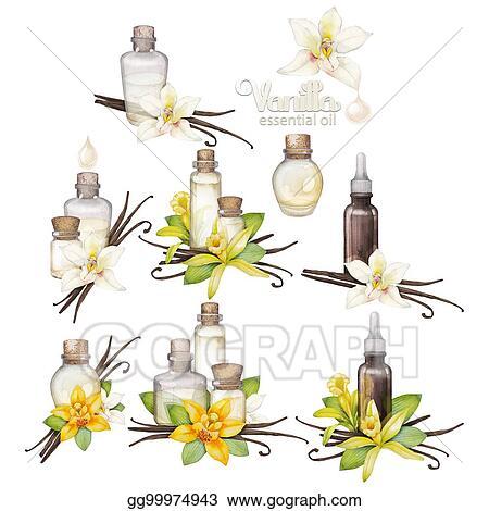 Dessin aquarelle vanille huile collection gg99974943 dessin clipart gograph - Vanille dessin ...