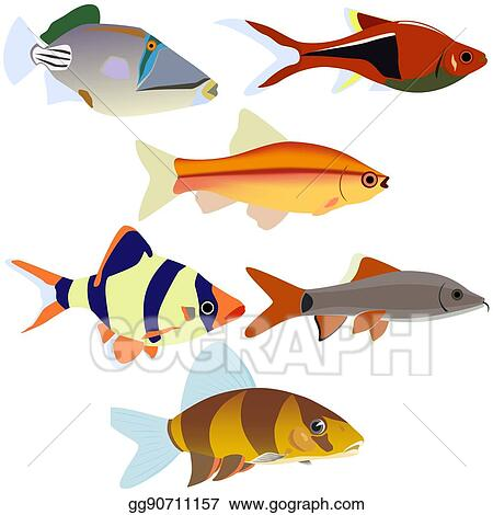 Vector Art Aquarium Fish 2 Clipart Drawing Gg90711157 Gograph