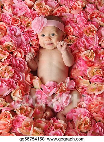 Stock Photo Baby In A Bed Of Roses Stock Photos Gg56754158 Gograph