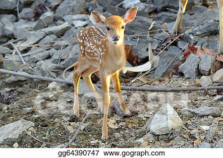 MYRU 200 Photos-Sika Deer Photo Album for Baby Kids 200 4x6 Photos 200 Photos- 4x6 Inch,Deer