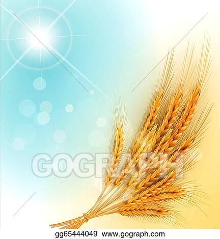 Drawings Background With Gold Ears Of Wheat And Sun Rays Stock