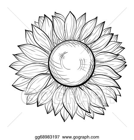 Beautiful Black And White Sunflower Isolated On Background