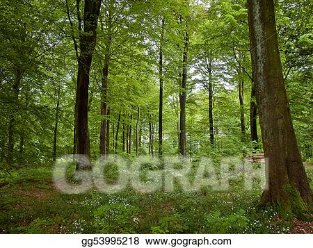 Stock Photos Beautiful Forest Landscape Nature Background Stock