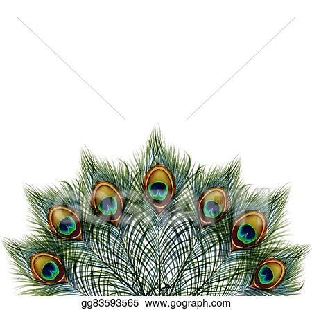 EPS Vector - Beautiful vector peacock feathers on retro