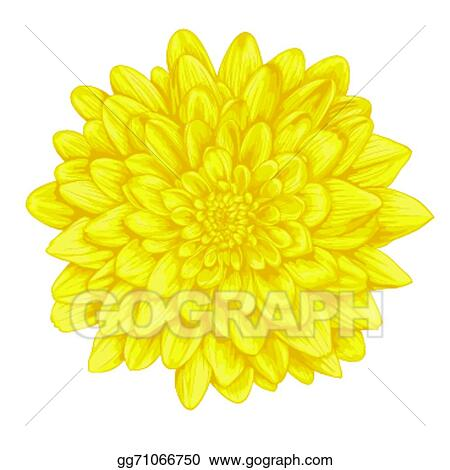 4cdb04e55d8 Beautiful yellow dahlia with the effect of a watercolor drawing isolated on  white background.