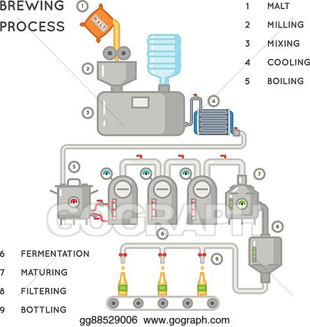 Vector Illustration - Beer process  brewing infographic or