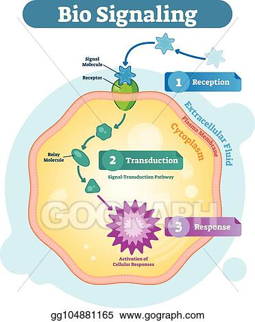 Biological cell clipart — img 1
